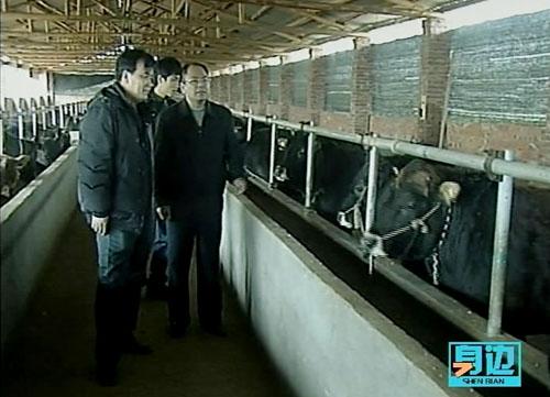 养牛厂组织结构图