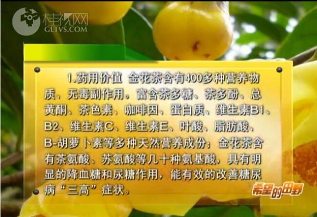 知识链接:金花茶的药用和经济价值