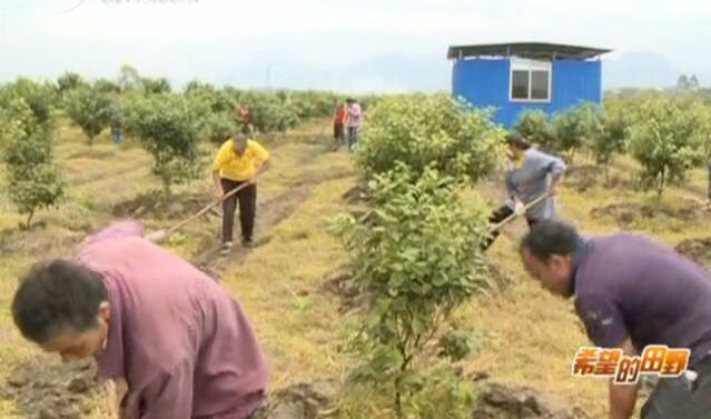 土壤酸化怎应对 农技专家有妙招
