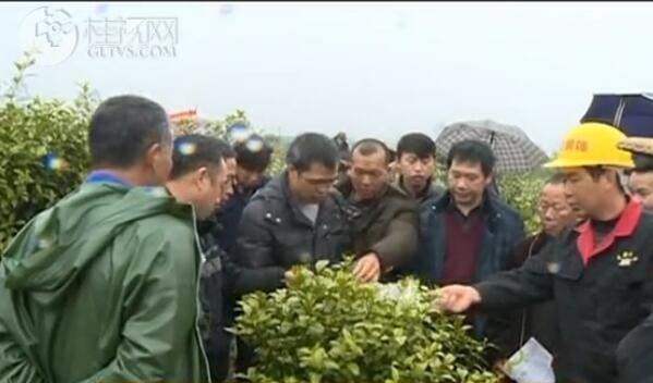 永福:柑桔黄龙病培训下田间 为春播种保驾护航